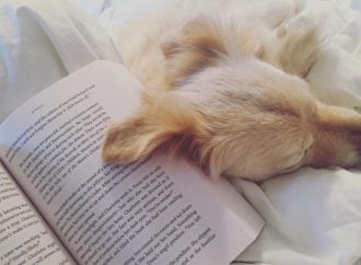 13 Reasons Why Dogs Love Books