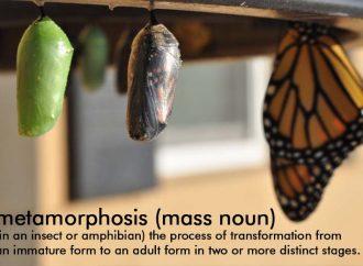 Stephen Spotte's Scientific Word Of The Week: Metamorphosis