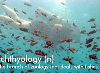 Stephen Spotte's Scientific Word Of The Week: Ichthyology