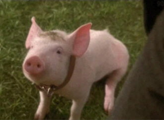 Top 10 Pigs In Literature
